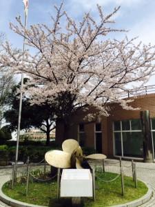 講演会場桜