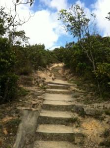 延々と続く階段(これは開始早々の簡単に登れるもの)。だんだん高低差がひどくなる。