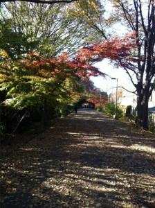 武蔵野散歩2