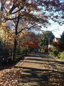 武蔵野散歩3